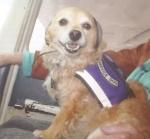 Servicedog Gizmo. Foto: Allan James, Präsident der PBY Catalina Foundation.