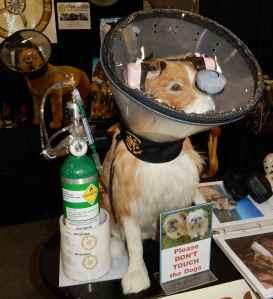 Was auf den ersten Blick wie eine Kotztüte für Hunde aussieht, ist – eine Sauerstoffversorgung für Hunde. Wenn der Druck in der Kabine abfällt, soll doch auch der geliebte Vierbeiner weiterleben.